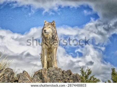Gray wolf standing on Ridge in Northern Minnesota,digital oil painting - stock photo