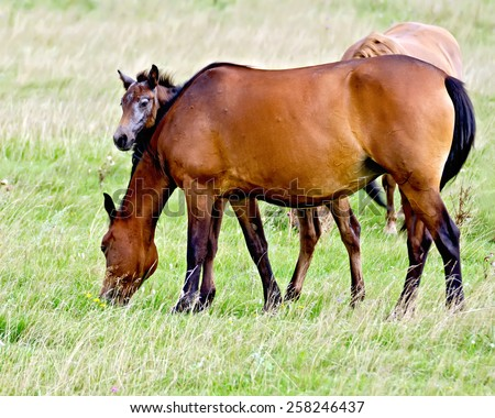 Grazing bay horse and piebald foal on a background of green grass - stock photo