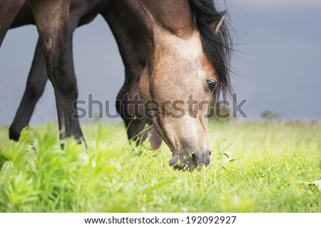 Grazing horse in cloudy weather, close up - stock photo