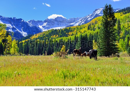 grazing horse in the alpine scenery during foliage season near county road 7 - stock photo