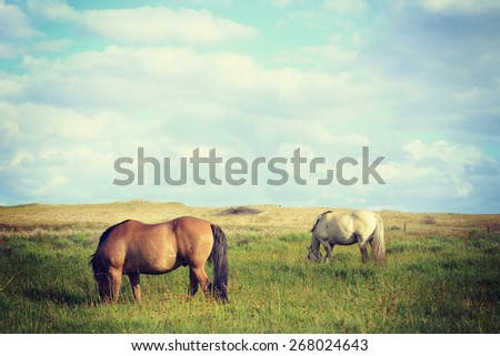 Grazing horses on pasture under blue sky countryside landscape. Vibrant colors vintage effect photography. - stock photo