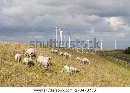 Grazing sheep at a dike with some big windmills behind them - stock photo
