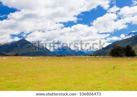 Grazing sheep in glacial Rees Dart river valley with Mt Aspiring National Park, Southern Alps, vista backdrop forming an iconic New Zealand landscape - stock photo