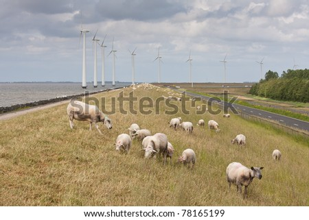 Grazing sheep with some big windmills in the sea behind them - stock photo
