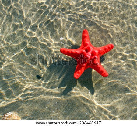 great and rare red starfish floating on the sea water - stock photo