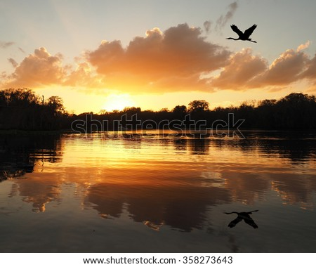Great Blue Heron Flies Over River as the Sun Sets          - stock photo