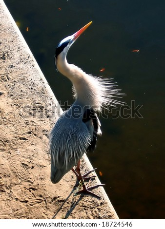 great blue heron in the harbor - stock photo