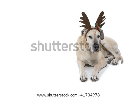 Great Dane With Reindeer Antlers - stock photo