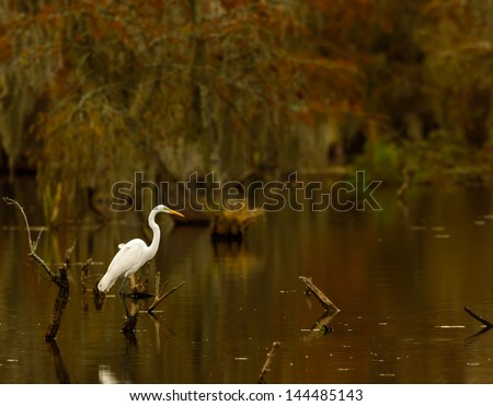 Great Egret (Ardea alba) posing on a stump in Lake Martin swamp, Breaux Bridge, Louisiana in the heart of Cajun Country. - stock photo
