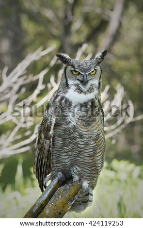 Great Horn Owl - stock photo