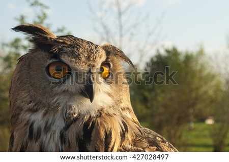 Great horned eagle owl thoughtfully looking through you - stock photo
