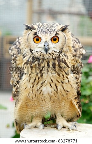 Great Horned Owl middle-shot vertical - stock photo