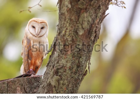 Great Horned Owl with Owlet - stock photo