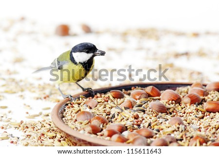 great tit bird, picking seeds at the feeding table - stock photo