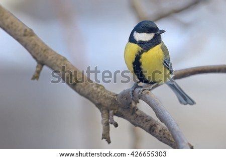 great tit on tree brunch - stock photo