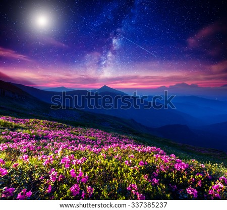 Great view of the magic pink rhododendron flowers on the hill. Dramatic and fantastic scene. Location  Carpathian, Ukraine, Europe. Beauty world. Instagram toning effect. - stock photo
