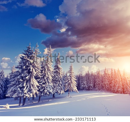 Great view of winter landscape in the sunny beams. Dramatic evening scene. Natural park. Carpathian, Ukraine, Europe. Beauty world. Retro filter. Instagram toning effect. Happy New Year! - stock photo
