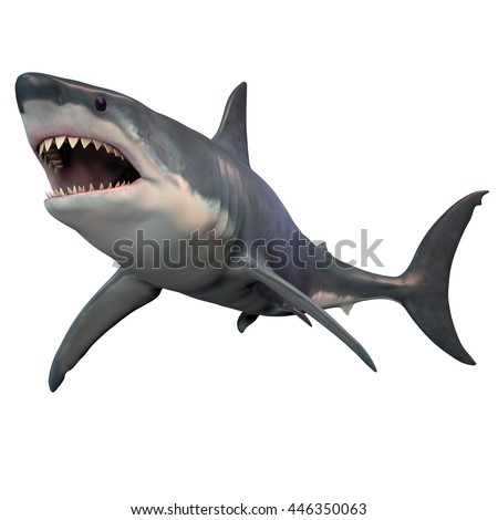 Great White Shark Isolated 3D Illustration - The Great White shark can grow over 8 meters or 26 feet and live to 70 years of age. - stock photo