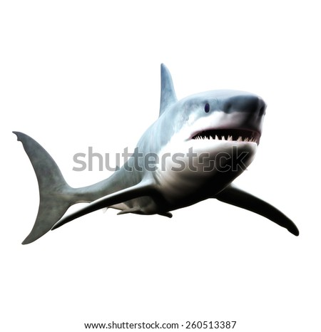 Great white shark swimming on a white background. - stock photo