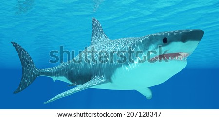 Great White Shark Undersea - The Great White Shark can live for more than 70 years and reach a length of 8 meters or 26 feet. - stock photo
