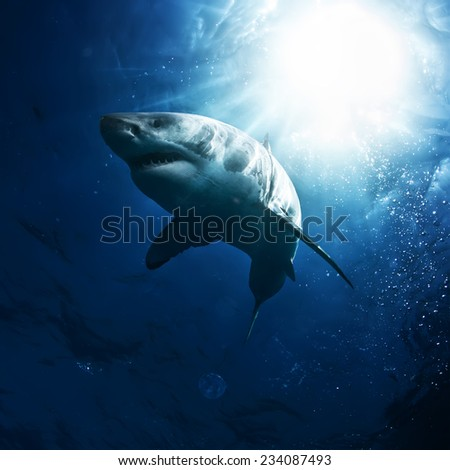 Great White Sharks in The Ocean underwater with sunrays - stock photo
