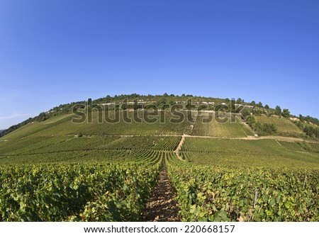 great wine vineyard in bourgogne france - stock photo