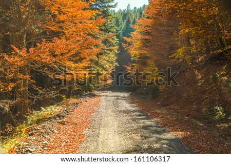 Greece Valia kalda trees with golden leaves at autumn above a road path - stock photo