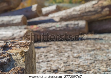 Greece Valia kalda,various size cut tree trunks logs body firewood stack in forest on background of forest. deforestation area in spring. - stock photo
