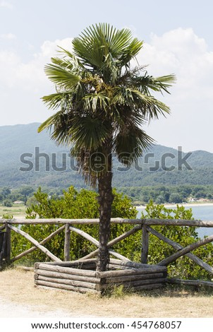 Greek lonely palm tree on a background of blue sky and green island - stock photo