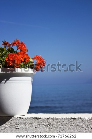 Greek specific-red flower with blue sea background with copy space - stock photo