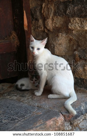 Greek street white cat with kitten in doorway at the old medieval town (Crete, Greece) - stock photo