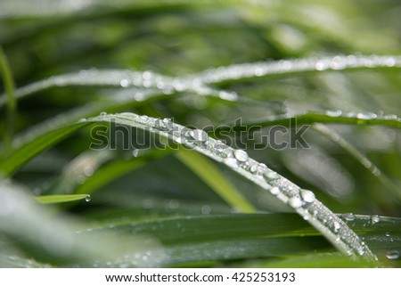 Green a leaves of flowers and drops dew - stock photo