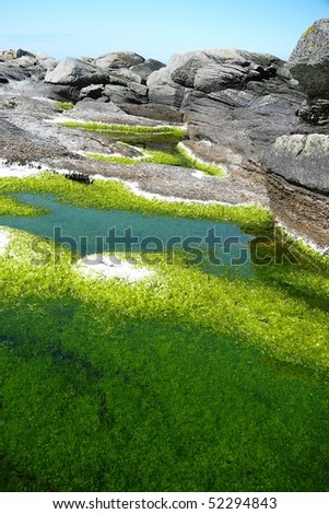 Green Algae - stock photo