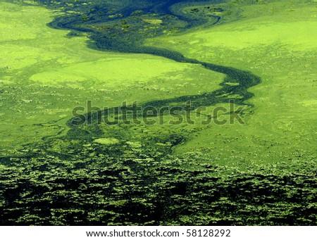 Green algae abstract - stock photo