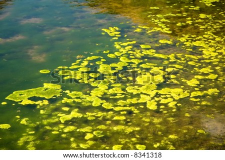 Green algae growing on the water's surface. - stock photo