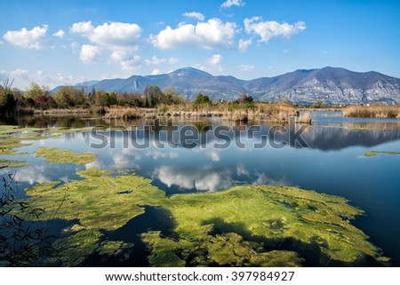 green algae in the lake in front of the mountains under a clear sky - stock photo