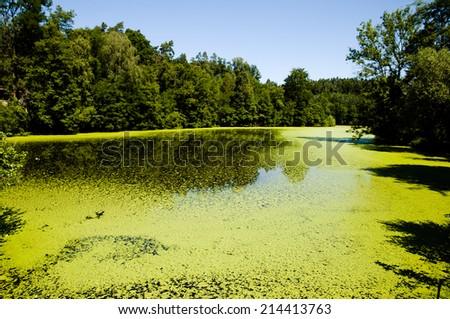 Green Algae Lake - stock photo