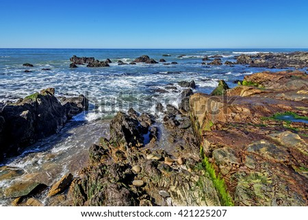 Green algae pools, rock, and unusual geological formations at low tide, along the rugged Big Sur coastline, near Monterey, CA. on the California Central Coast. - stock photo