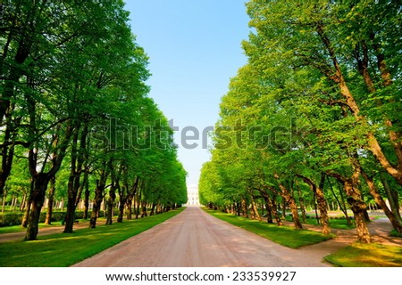 green alley in a summer park - stock photo