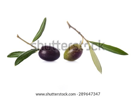 Green and black olives with leaves on its branch to make olive oil - stock photo