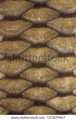 green and gold texture leather carp - stock photo