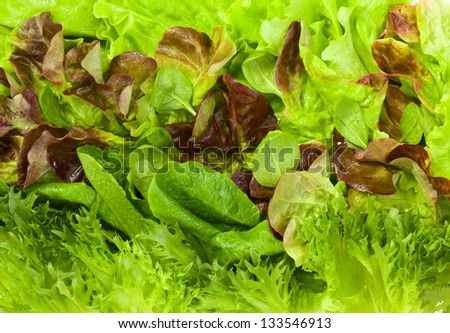 Green and Red Leaf Lettuce - stock photo