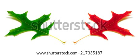 Green and red leafs of oak isolated on white background - stock photo