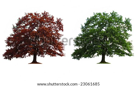 green and red old oak trees isolated over white - stock photo