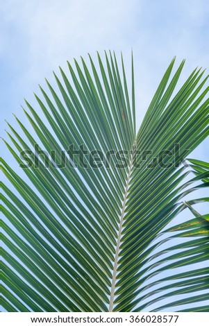 Green and yellow palm leaf/frond against a hazy blue and white background. - stock photo