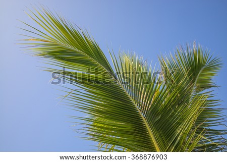 Green and yellow palm leaves/fronds in a breeze. - stock photo