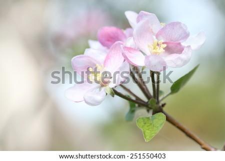 Green apple tree - stock photo