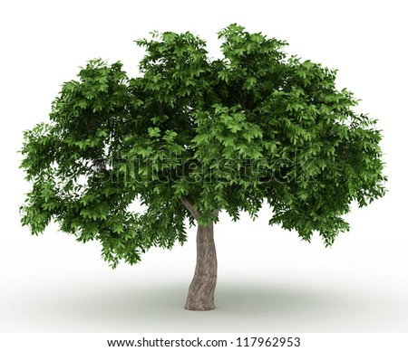 Green Apple tree isolated over white - stock photo