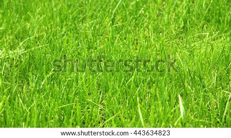 Green background by the fresh grass - stock photo