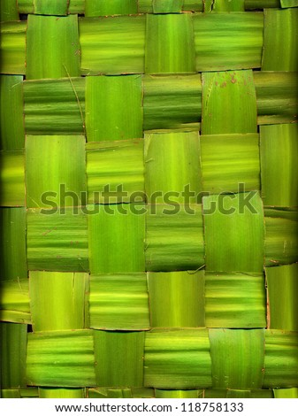 green background made of palm leaves - stock photo